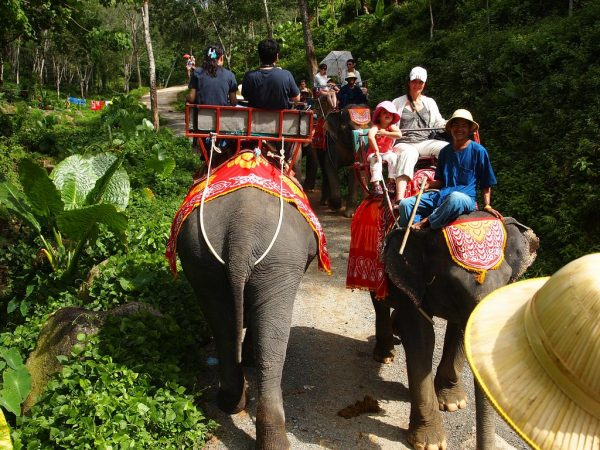 Elephant Safari in Phuket